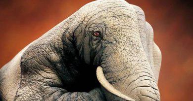 «Μεταμορφώνει» τα χέρια σε διάφορα ζώα