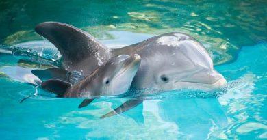 Φάλαινες και δελφίνια ζουν σε κοινωνίες και μιλούν διαλέκτους
