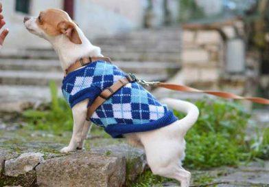 Πώς να προστατεύσετε τον σκύλο σας τον χειμώνα